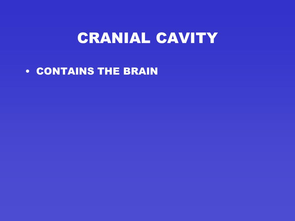 DORSAL OR POSTERIOR CAVITY ONE OF TWO MAIN BODY CAVITIES ONE LONG CONTINUOUS CAVITY ON BACK OF THE BODY DIVIDED INTO TWO SECTIONS –CRANIAL CAVITY –SPI