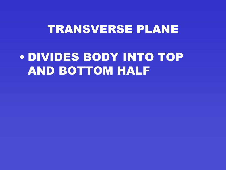 TRANSVERSE PLANE ONE OF THREE MAIN PLANES