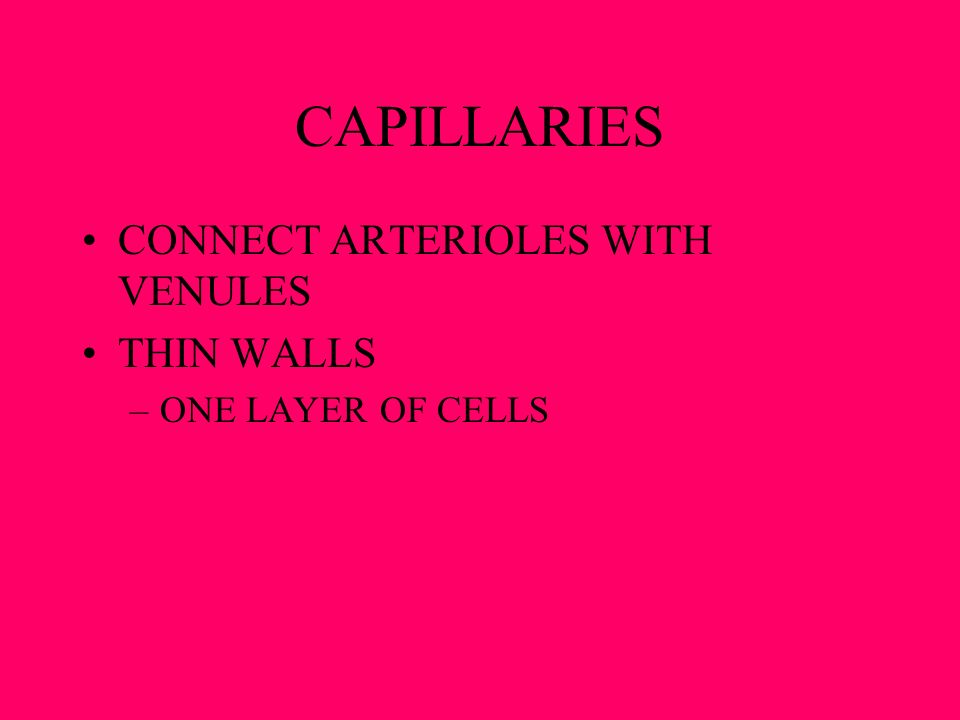 CAPILLARIES CONNECT ARTERIOLES WITH VENULES THIN WALLS –ONE LAYER OF CELLS