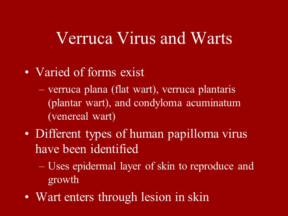 Verruca Virus and Warts Varied of forms exist –verruca plana (flat wart), verruca plantaris (plantar wart), and condyloma acuminatum (venereal wart) D