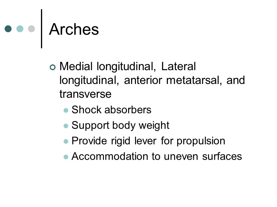 Arches Medial longitudinal, Lateral longitudinal, anterior metatarsal, and transverse Shock absorbers Support body weight Provide rigid lever for prop