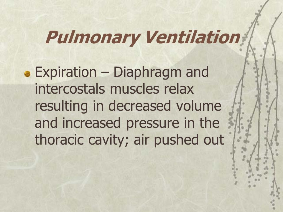 Pulmonary Ventilation Expiration – Diaphragm and intercostals muscles relax resulting in decreased volume and increased pressure in the thoracic cavit