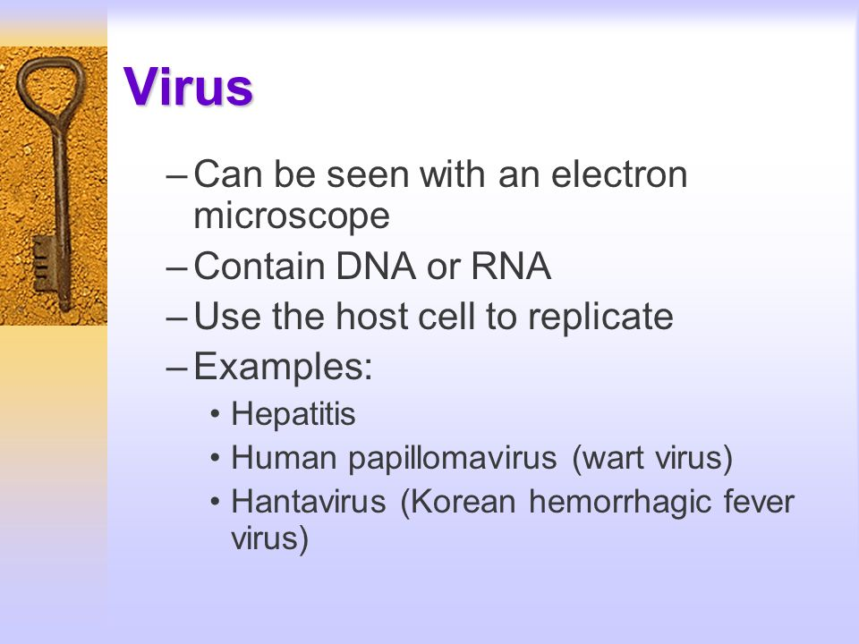 Virus –Can be seen with an electron microscope –Contain DNA or RNA –Use the host cell to replicate –Examples: Hepatitis Human papillomavirus (wart vir