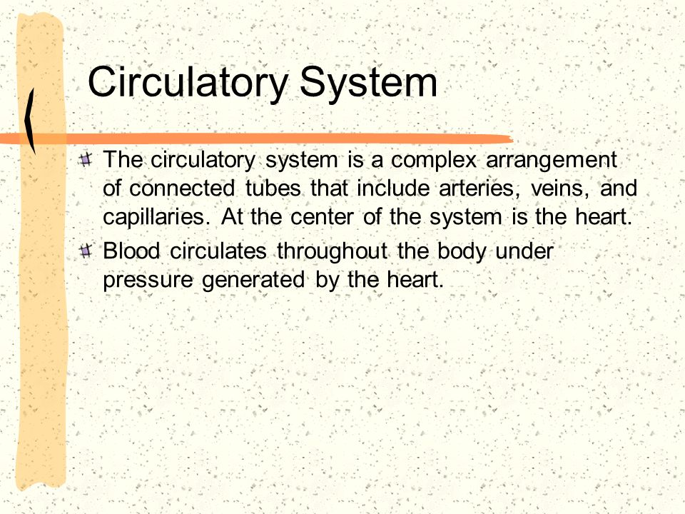 The circulatory system is a complex arrangement of connected tubes that include arteries, veins, and capillaries. At the center of the system is the h