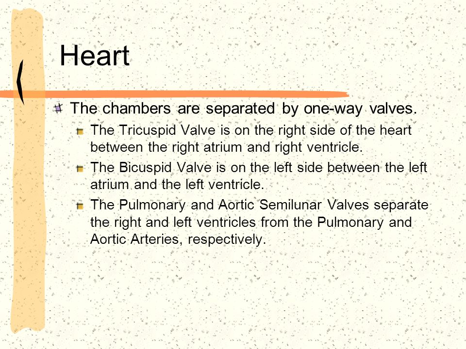 Heart The chambers are separated by one-way valves. The Tricuspid Valve is on the right side of the heart between the right atrium and right ventricle