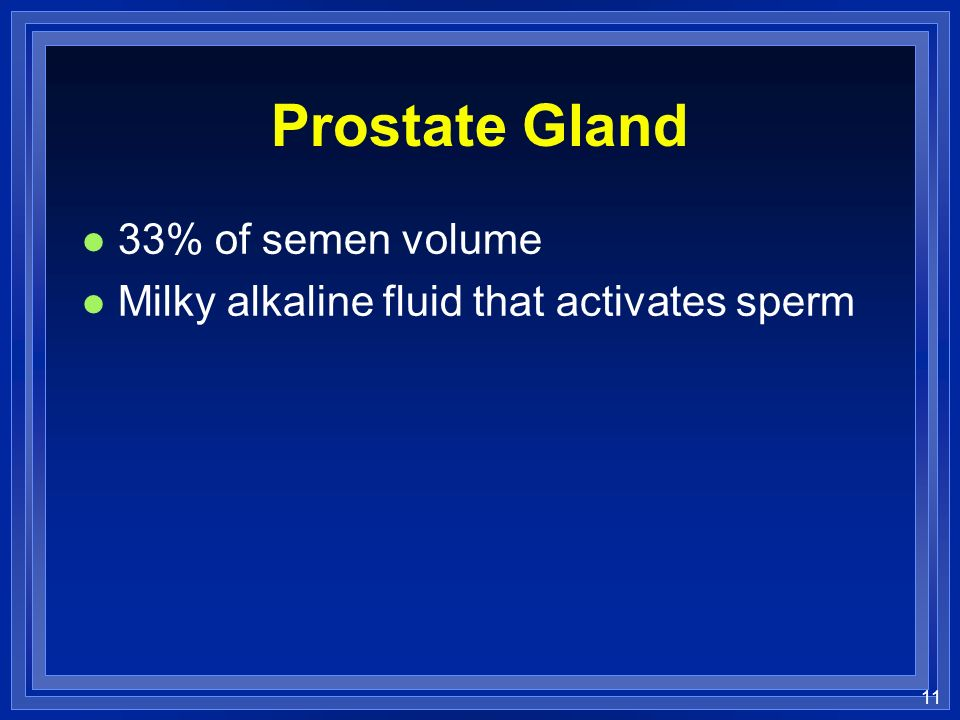 11 Prostate Gland l 33% of semen volume l Milky alkaline fluid that activates sperm