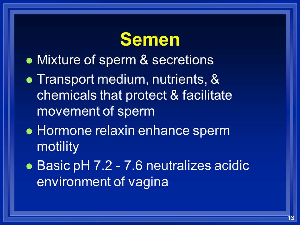 13 Semen l Mixture of sperm & secretions l Transport medium, nutrients, & chemicals that protect & facilitate movement of sperm l Hormone relaxin enhance sperm motility l Basic pH 7.2 - 7.6 neutralizes acidic environment of vagina