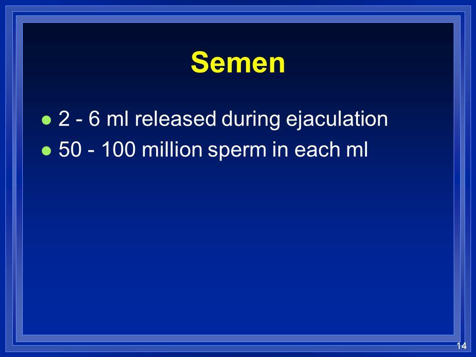 14 Semen l 2 - 6 ml released during ejaculation l 50 - 100 million sperm in each ml