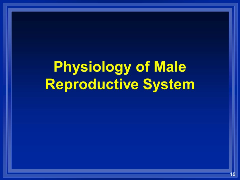 15 Physiology of Male Reproductive System