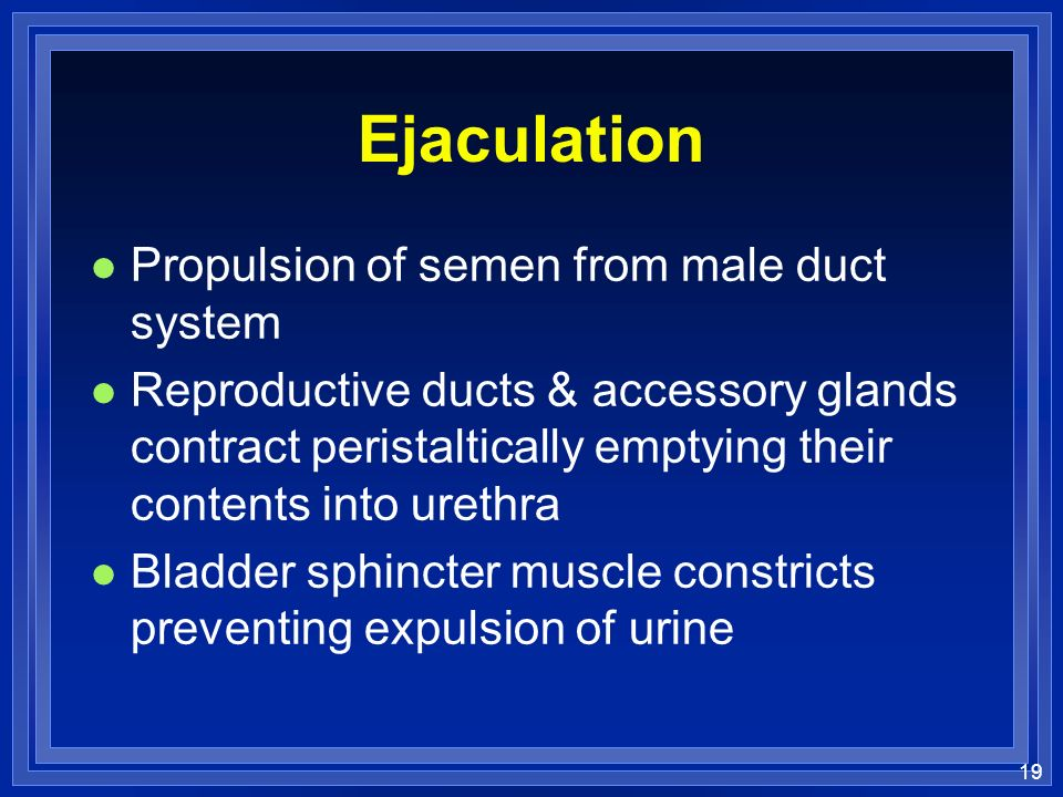 19 Ejaculation l Propulsion of semen from male duct system l Reproductive ducts & accessory glands contract peristaltically emptying their contents in