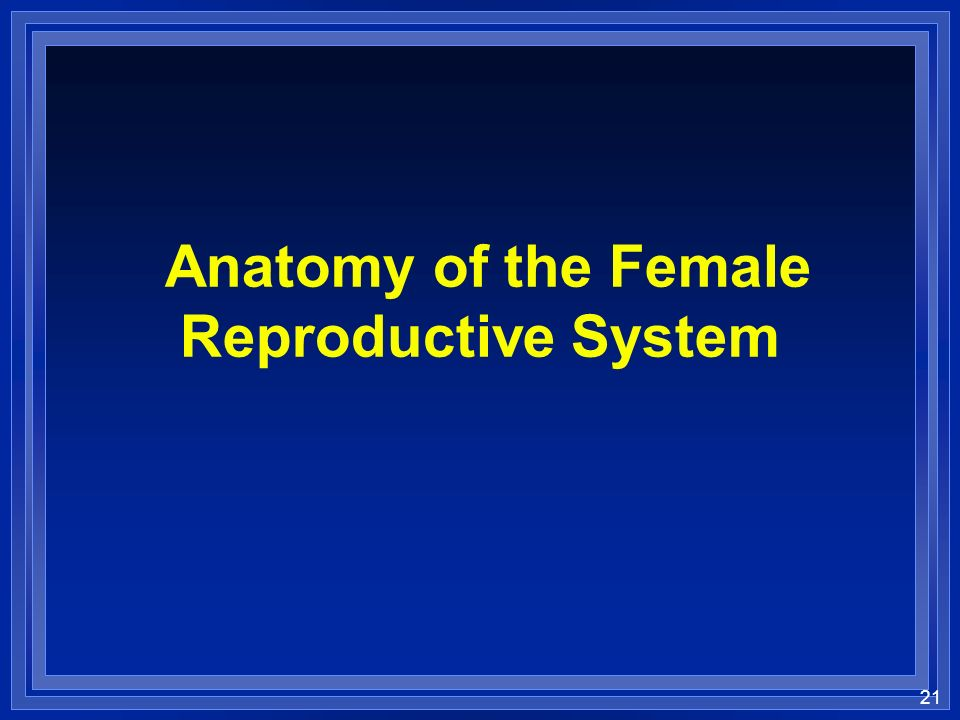 21 Anatomy of the Female Reproductive System