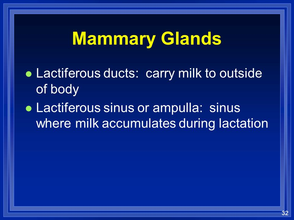 32 Mammary Glands l Lactiferous ducts: carry milk to outside of body l Lactiferous sinus or ampulla: sinus where milk accumulates during lactation