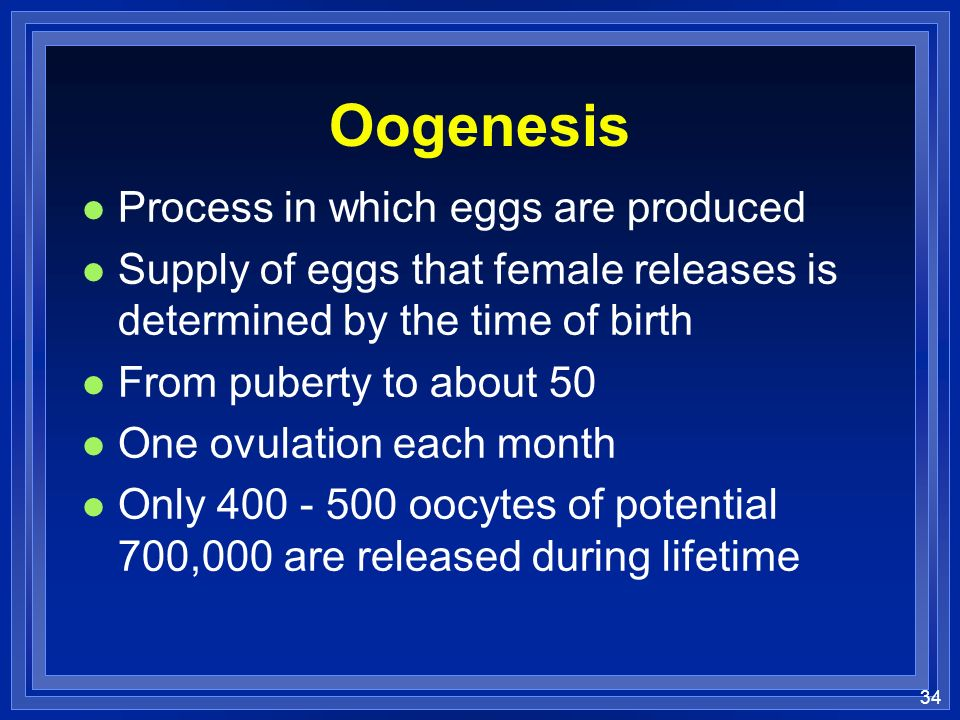 34 Oogenesis l Process in which eggs are produced l Supply of eggs that female releases is determined by the time of birth l From puberty to about 50