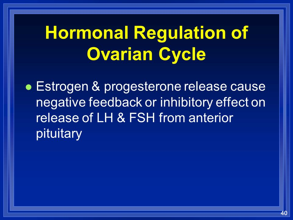 40 Hormonal Regulation of Ovarian Cycle l Estrogen & progesterone release cause negative feedback or inhibitory effect on release of LH & FSH from ant