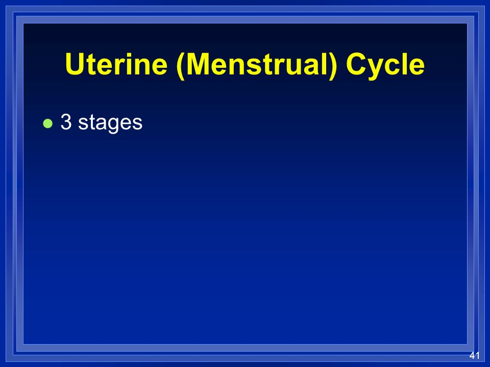 41 Uterine (Menstrual) Cycle l 3 stages