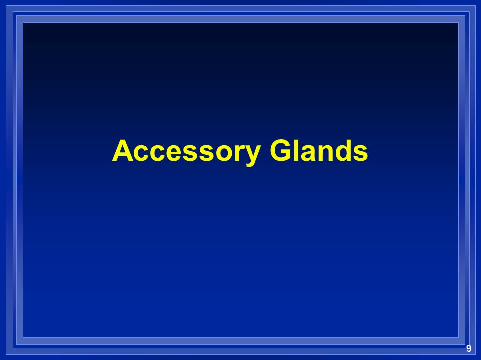 9 Accessory Glands