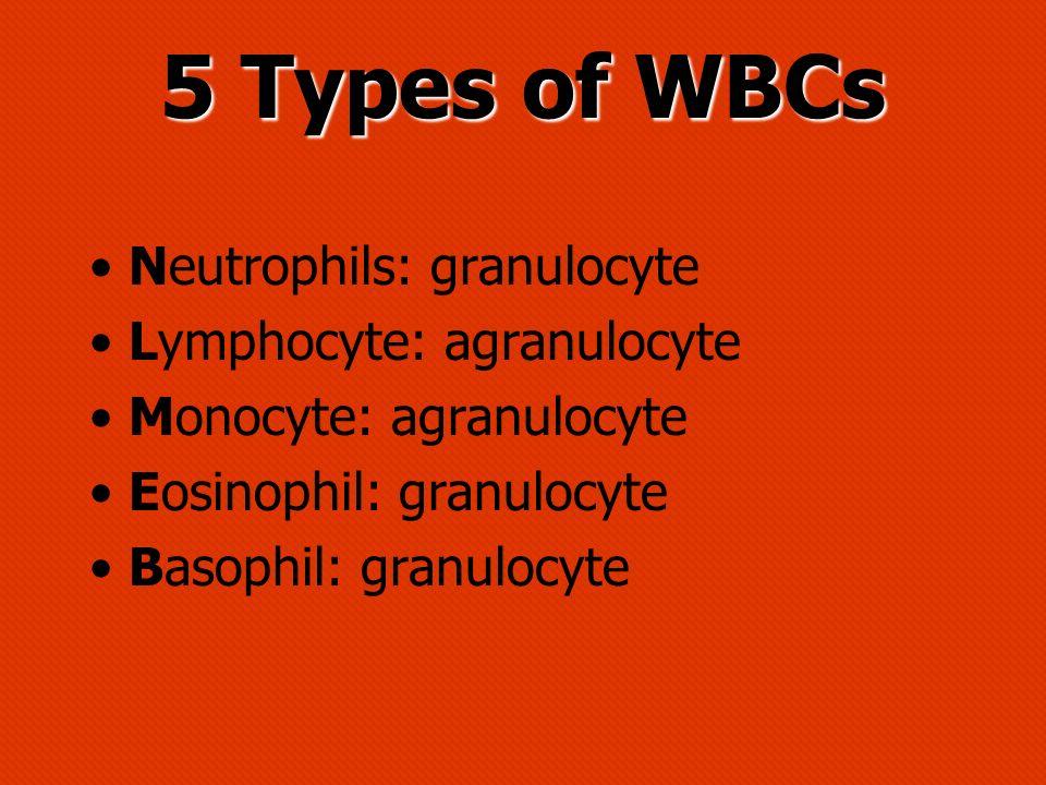 5 Types of WBCs Neutrophils: granulocyte Lymphocyte: agranulocyte Monocyte: agranulocyte Eosinophil: granulocyte Basophil: granulocyte