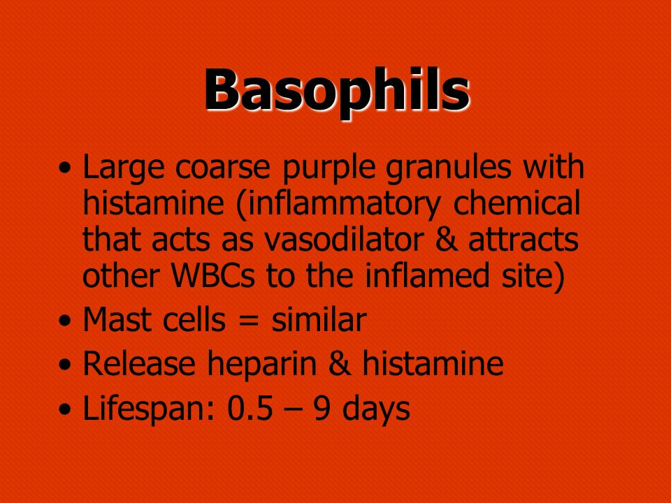 Basophils Large coarse purple granules with histamine (inflammatory chemical that acts as vasodilator & attracts other WBCs to the inflamed site) Mast
