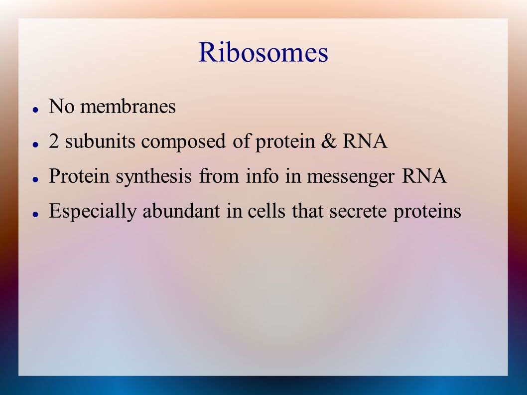 Ribosomes No membranes 2 subunits composed of protein & RNA Protein synthesis from info in messenger RNA Especially abundant in cells that secrete pro