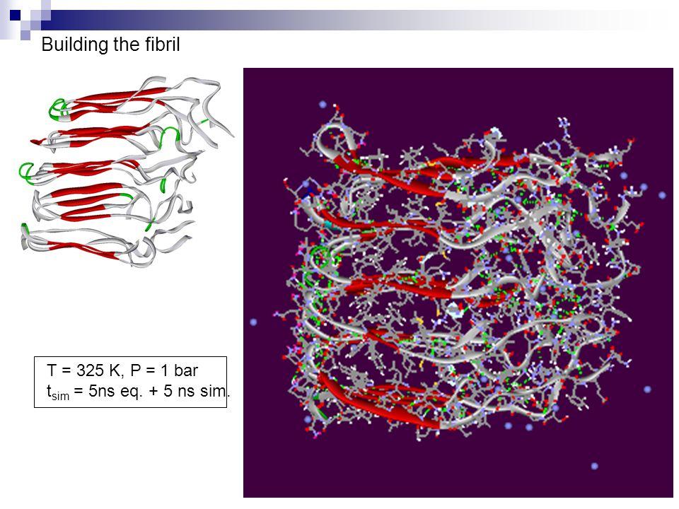 Building the fibril T = 325 K, P = 1 bar t sim = 5ns eq. + 5 ns sim.
