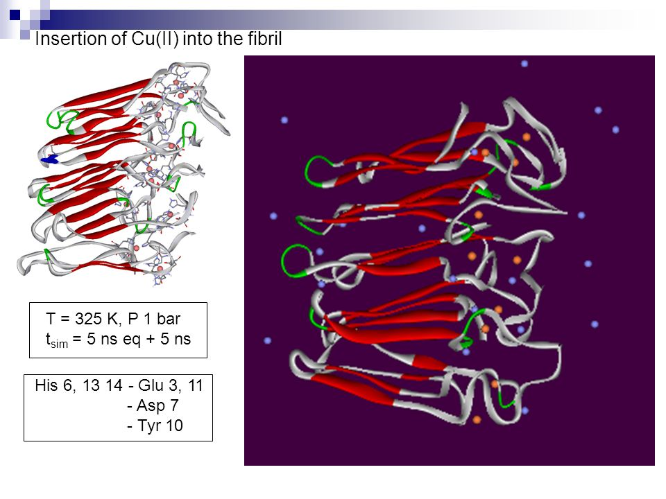 Insertion of Cu(II) into the fibril T = 325 K, P 1 bar t sim = 5 ns eq + 5 ns His 6, Glu 3, 11 - Asp 7 - Tyr 10