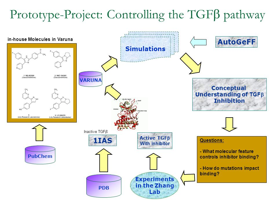 Prototype-Project: Controlling the TGF pathway PDB 1IAS Inactive TGF VARUNA Experiments in the Zhang Lab Active TGF With inhibitor PubChem in-house Mo