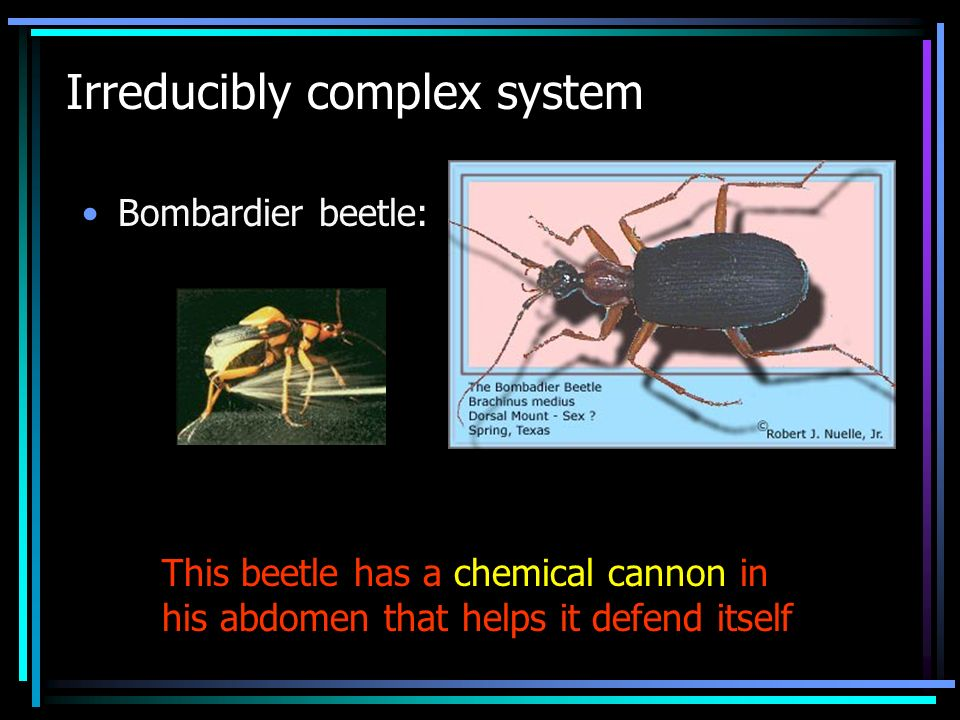 Irreducibly complex system Bombardier beetle: This beetle has a chemical cannon in his abdomen that helps it defend itself