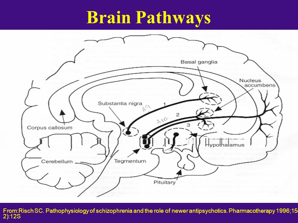 Brain Pathways From:Risch SC. Pathophysiology of schizophrenia and the role of newer antipsychotics. Pharmacotherapy 1996;15(1 pt 2):12S