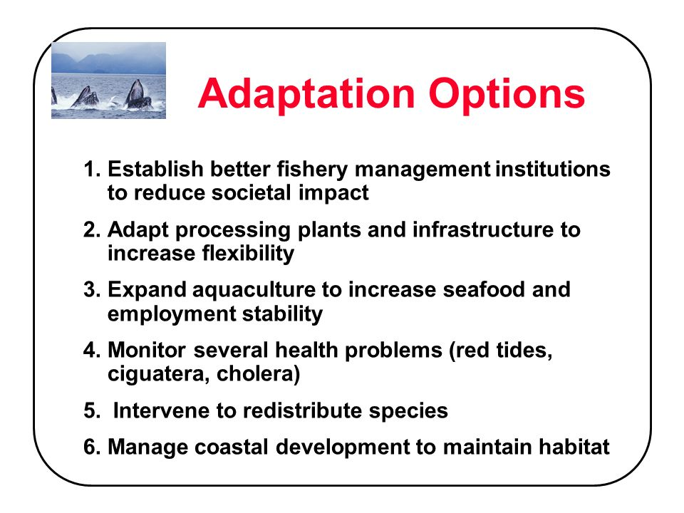 Adaptation Options 1.Establish better fishery management institutions to reduce societal impact 2.Adapt processing plants and infrastructure to increase flexibility 3.Expand aquaculture to increase seafood and employment stability 4.Monitor several health problems (red tides, ciguatera, cholera) 5.