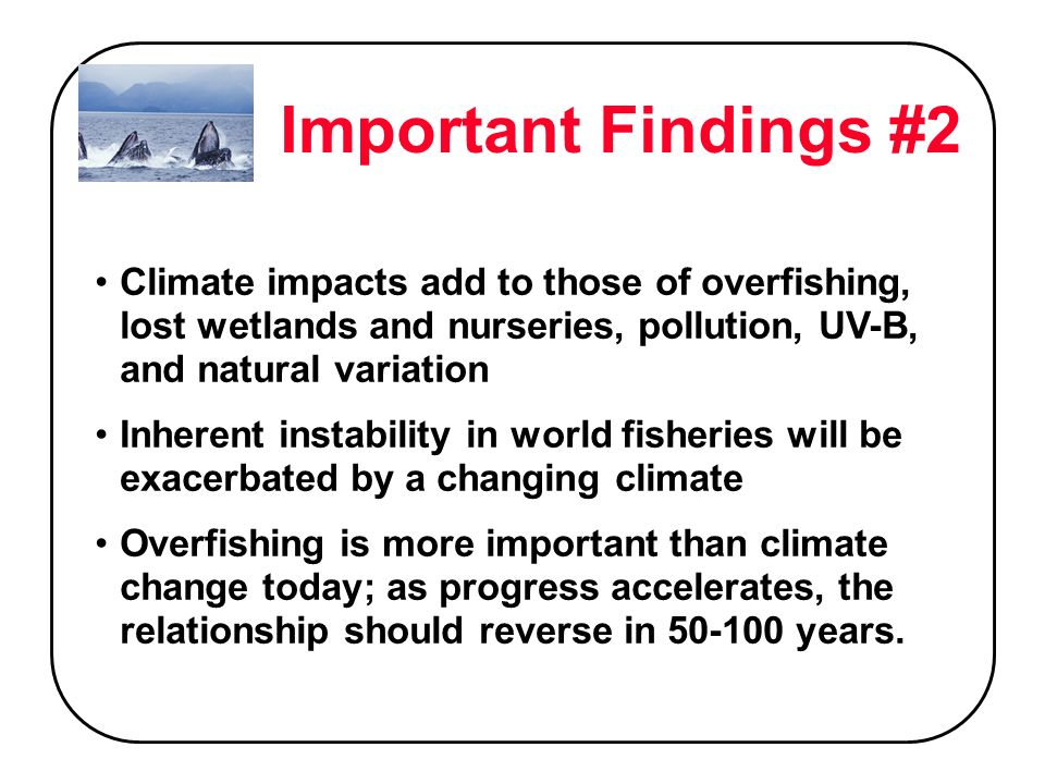 Important Findings #2 Climate impacts add to those of overfishing, lost wetlands and nurseries, pollution, UV-B, and natural variation Inherent instability in world fisheries will be exacerbated by a changing climate Overfishing is more important than climate change today; as progress accelerates, the relationship should reverse in 50-100 years.