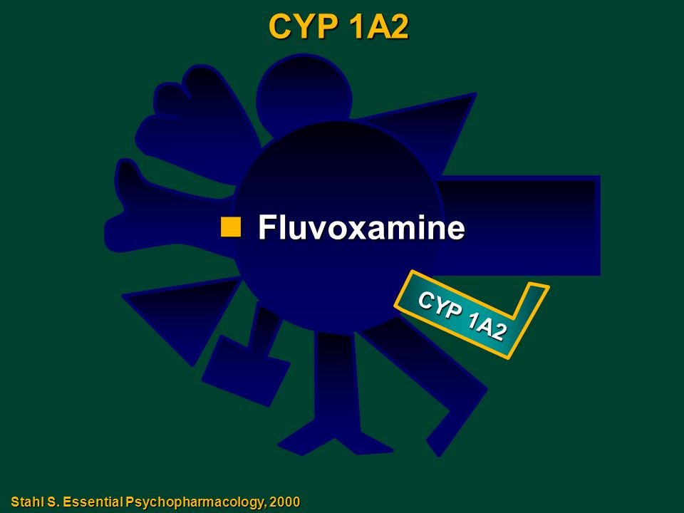 CYP 1A2 nFluvoxamine Stahl S. Essential Psychopharmacology, 2000