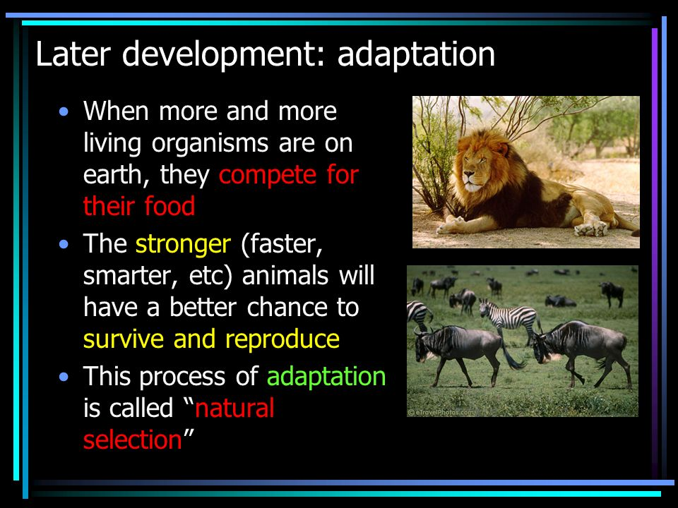 Later development: adaptation When more and more living organisms are on earth, they compete for their food The stronger (faster, smarter, etc) animal