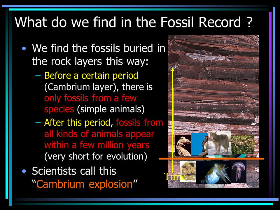 What do we find in the Fossil Record ? We find the fossils buried in the rock layers this way: –Before a certain period (Cambrium layer), there is onl