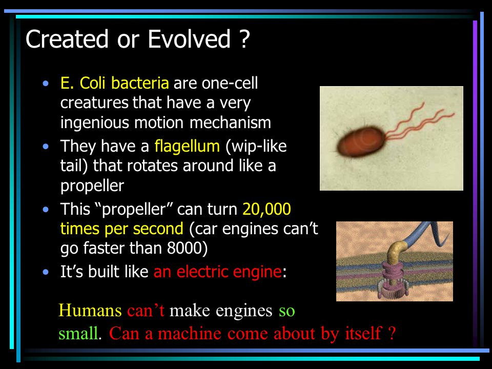 Created or Evolved ? E. Coli bacteria are one-cell creatures that have a very ingenious motion mechanism They have a flagellum (wip-like tail) that ro