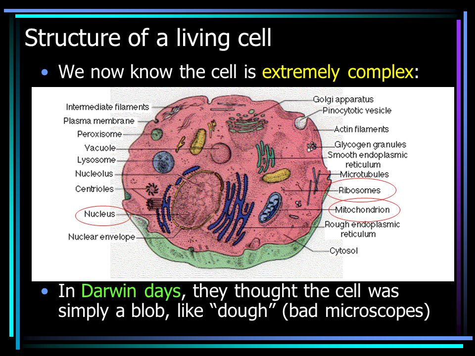 What is a cell made of .