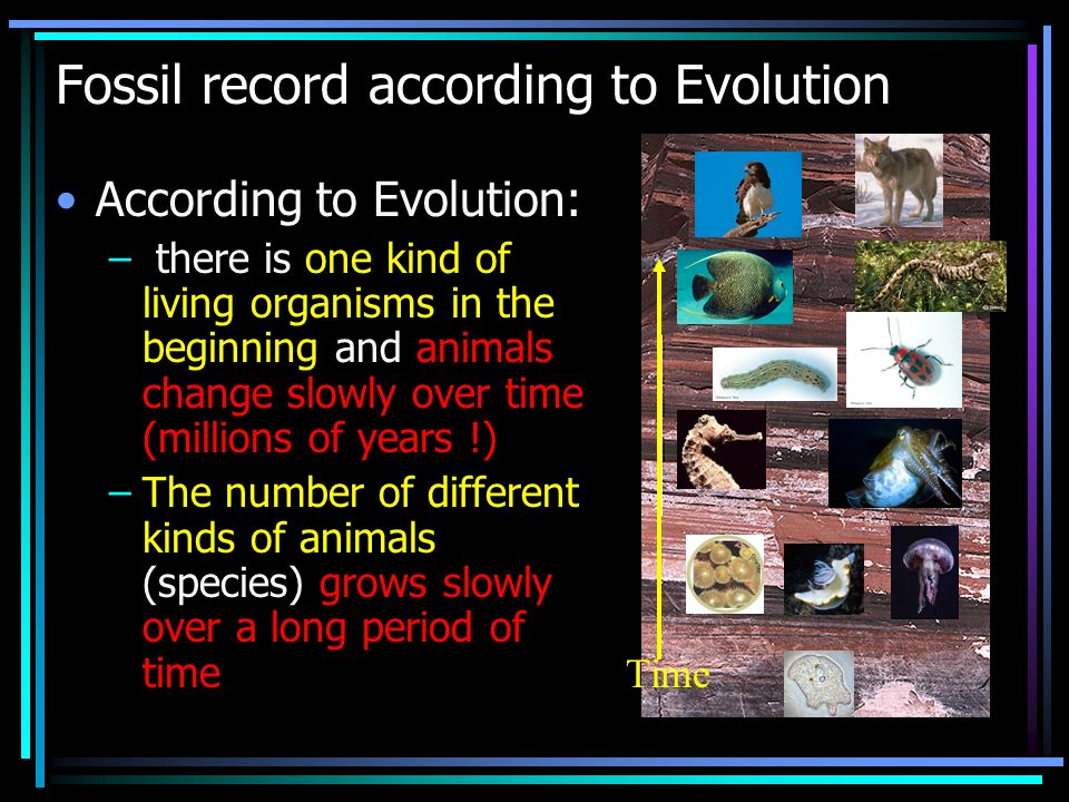 Fossil record in reality Bacteria (procaryotic cells) 3,500 millions years ago Complex (eucaryotic cells) 2,000 millions years ago Multicellular animals (jelly fish) 670 millions years ago Shell-bearing animals (insects) 540 millions years ago Vertebrates (simple fishes) 490 millions years ago Amphibians (frogs) 350 millions years ago Reptiles (lizards) 310 millions years ago Mammals 200 millions years ago Nonhuman primates 60 millions years ago Earliest apes 25 millions years ago Modern humans 0.15 millions years ago Over 100,000 species of insects appeared suddenly