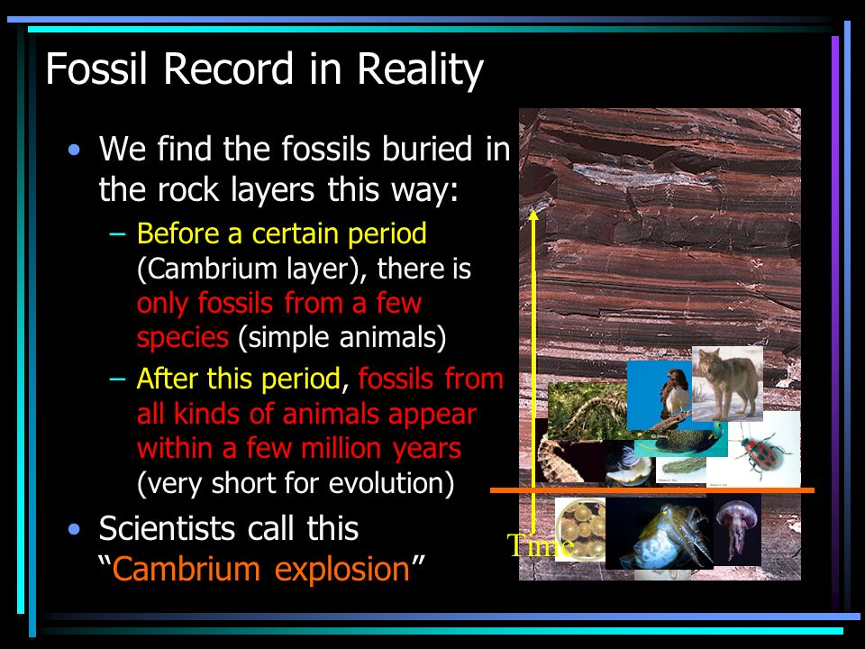 What does the Fossil record tell us .