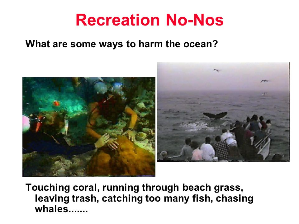 What are some ways to harm the ocean? Touching coral, running through beach grass, leaving trash, catching too many fish, chasing whales....... Recrea