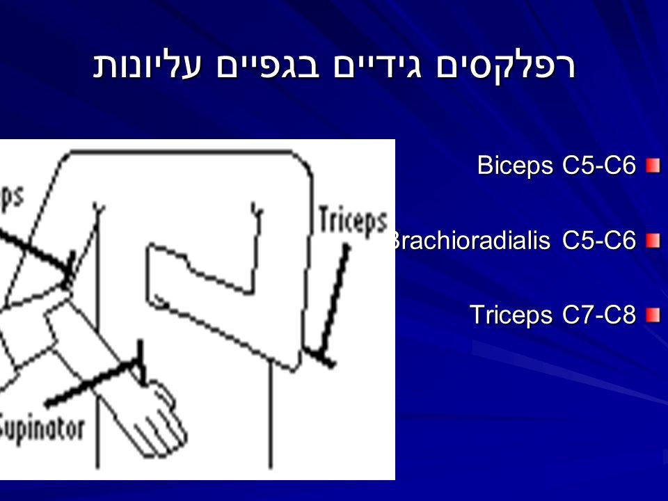 רפלקסים גידיים בגפיים עליונות Biceps C5-C6 Brachioradialis C5-C6 Triceps C7-C8