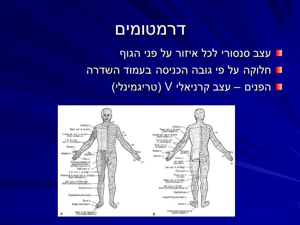 דרמטומים עצב סנסורי לכל איזור על פני הגוף חלוקה על פי גובה הכניסה בעמוד השדרה הפנים – עצב קרניאלי V (טריגמינלי)