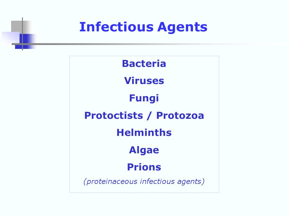 Bacteria Viruses Fungi Protoctists / Protozoa Helminths Algae Prions (proteinaceous infectious agents) Infectious Agents