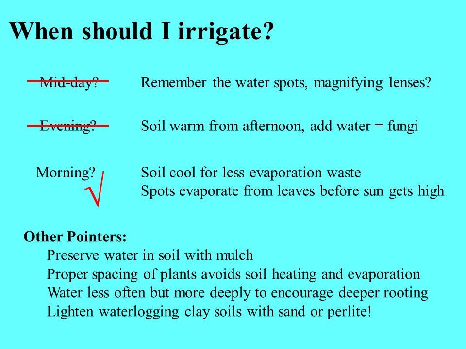 When should I irrigate.Mid-day?Remember the water spots, magnifying lenses.