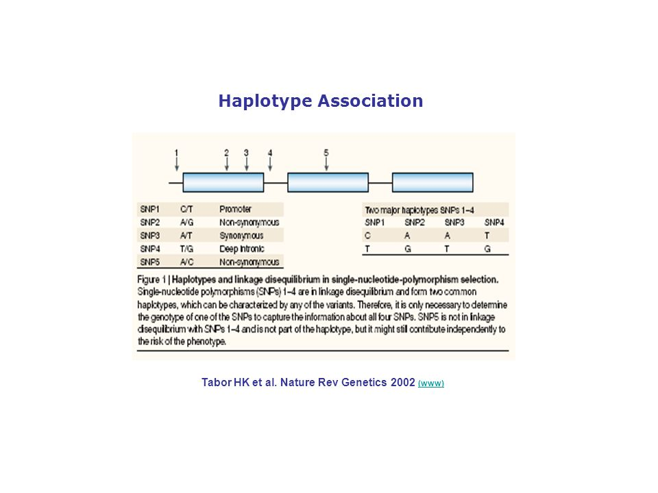Tabor HK et al. Nature Rev Genetics 2002 (www) (www) Haplotype Association