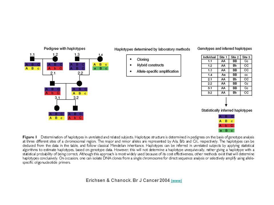 Erichsen & Chanock. Br J Cancer 2004 (www) (www)
