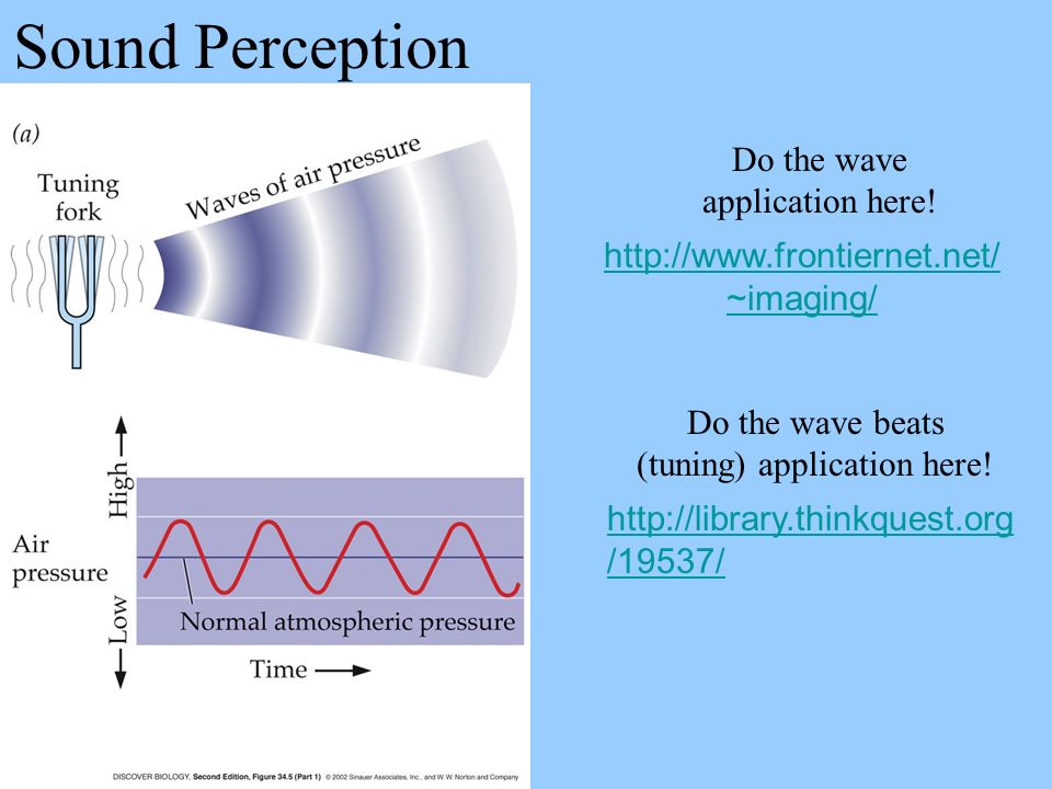 Sound Perception Do the wave application here! http://www.frontiernet.net/ ~imaging/ http://library.thinkquest.org /19537/ Do the wave beats (tuning)