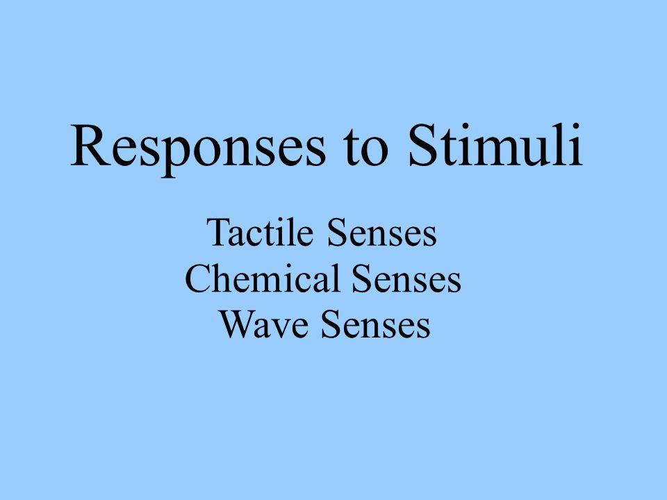 Responses to Stimuli Tactile Senses Chemical Senses Wave Senses