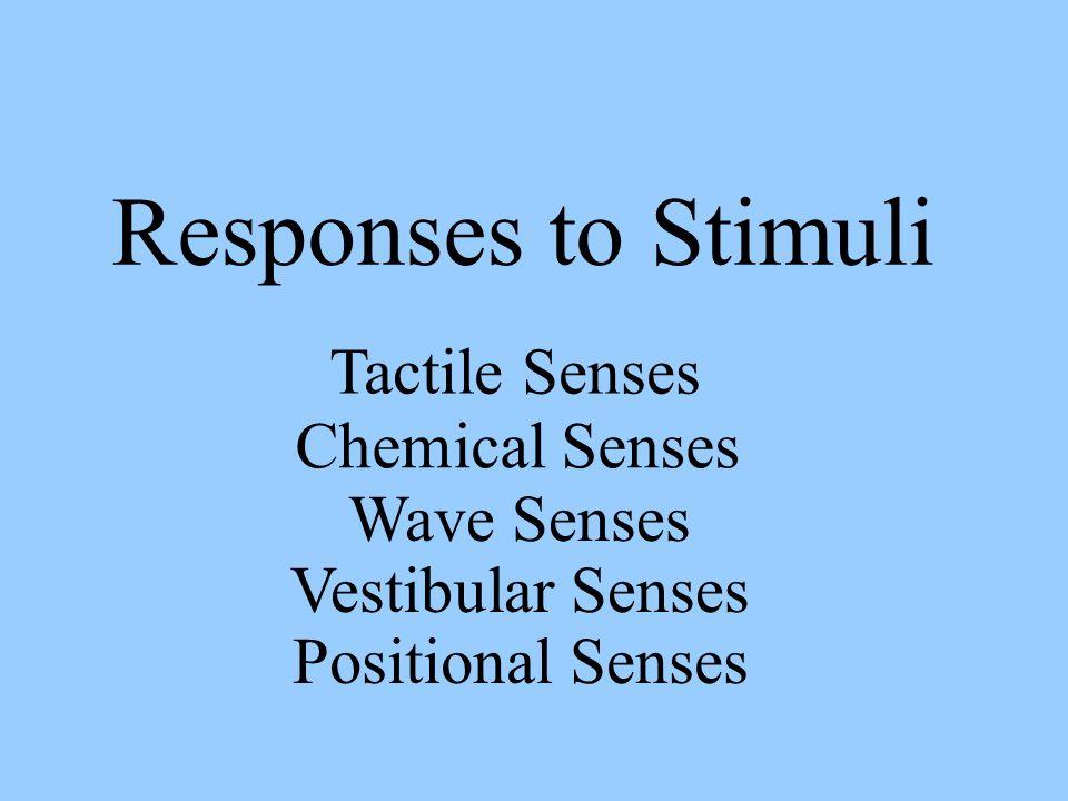Responses to Stimuli Tactile Senses Chemical Senses Wave Senses Vestibular Senses Positional Senses