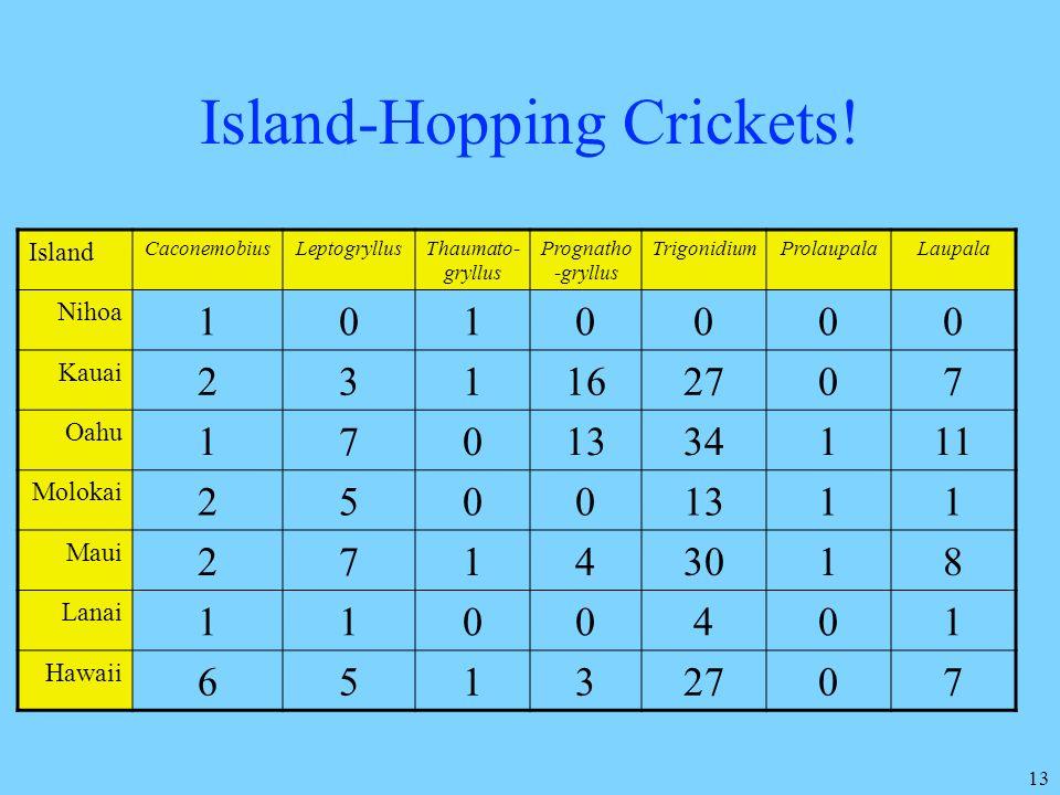 13 Island-Hopping Crickets! Island CaconemobiusLeptogryllusThaumato- gryllus Prognatho -gryllus TrigonidiumProlaupalaLaupala Nihoa 1010000 Kauai 23116
