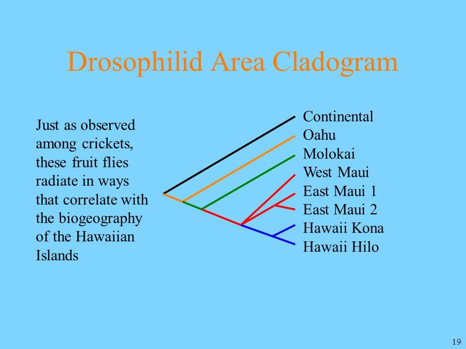19 Drosophilid Area Cladogram Continental Oahu Molokai West Maui East Maui 1 East Maui 2 Hawaii Kona Hawaii Hilo Just as observed among crickets, thes
