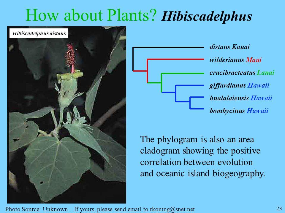 23 How about Plants? Hibiscadelphus distans Kauai wilderianus Maui crucibracteatus Lanai giffardianus Hawaii hualalaiensis Hawaii bombycinus Hawaii Th